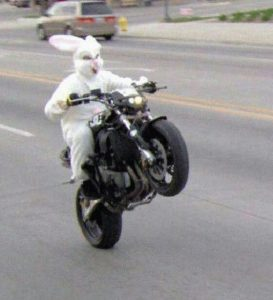 bunny doing a wheely on motorbike